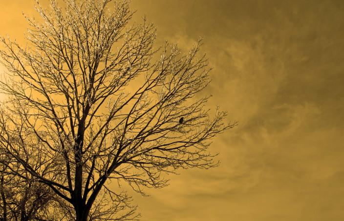winter.tree